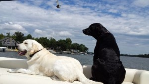 Rocky and Tucker on Pontoon